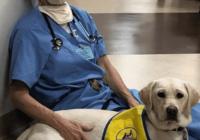Wynn-Dog-therapy