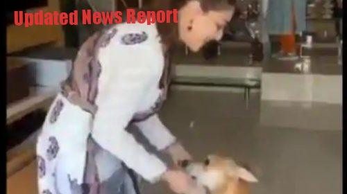 Madhuri dixit dances in lockdown with her dog