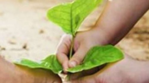 World Environment Day: CRPF to plant 22 lakh plants today for environmental protection