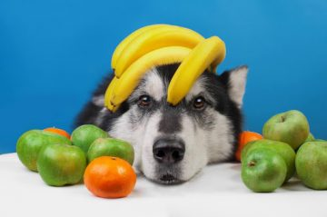 6 Types Of Fruit Dogs Can Eat